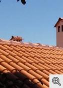 """""""Dakstiņu jumti"""""""